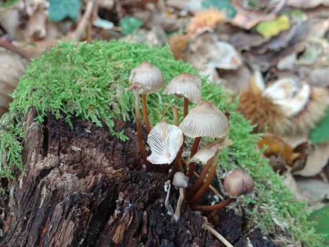 Leçon de choses: les champignons