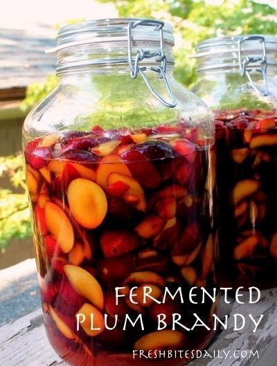 This fermented plum brandy will change the way you think about your fruit trees! This fermented plum brandy will change the way you think about your fruit trees! -  -