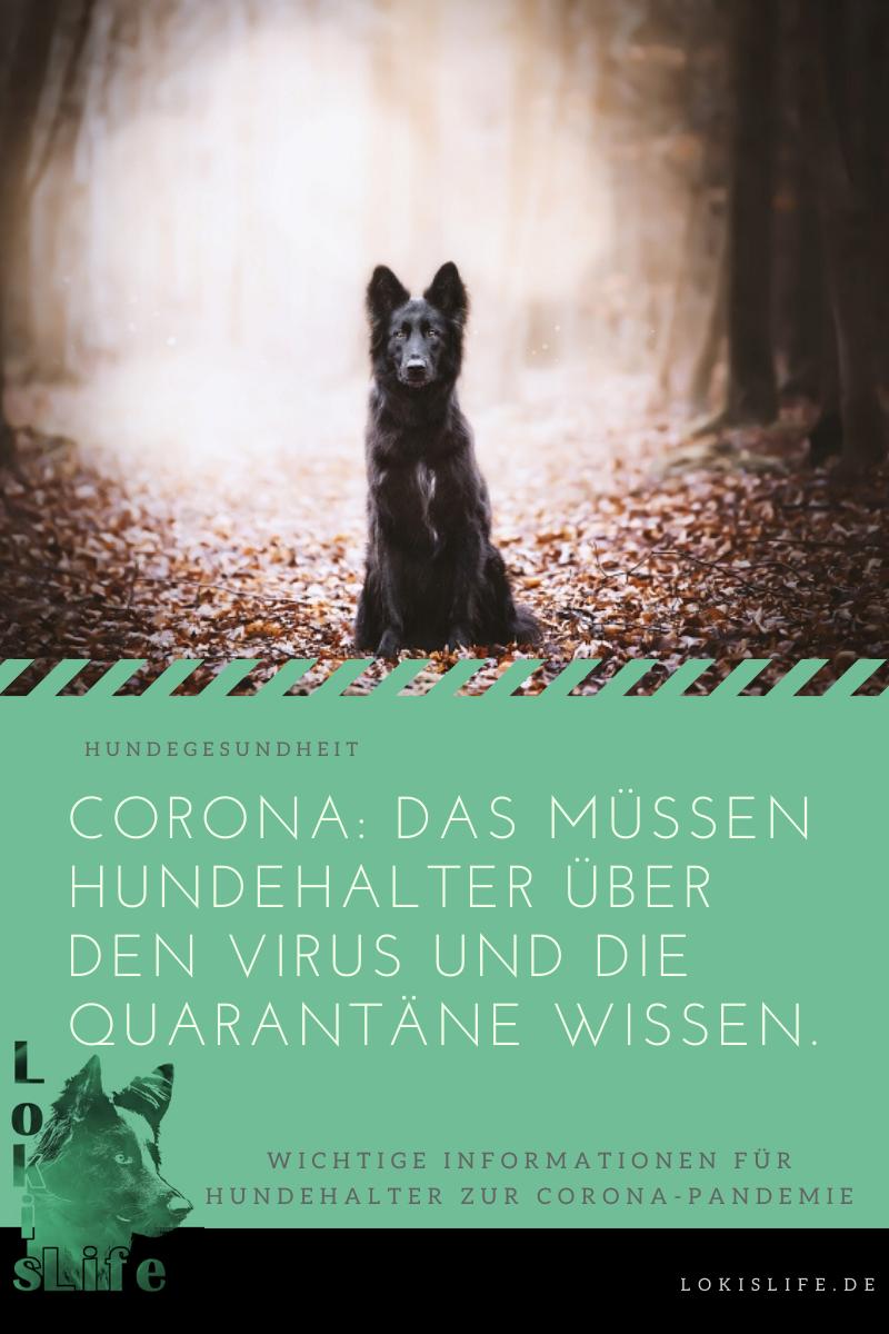 In Quarantäne Mit Hund Raus