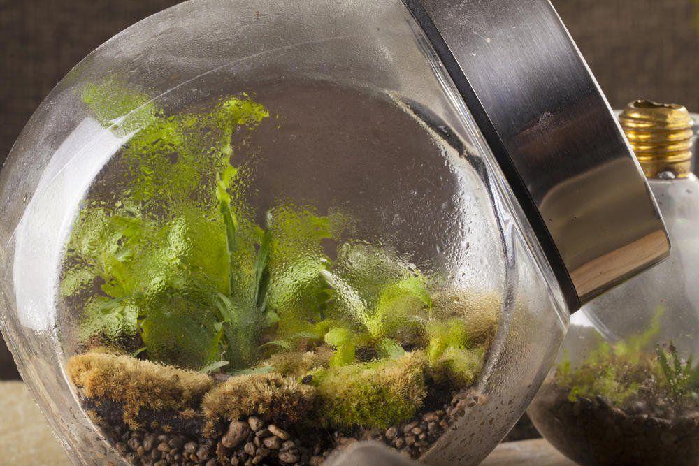 flaschengarten kleines kosystem im glas garten. Black Bedroom Furniture Sets. Home Design Ideas