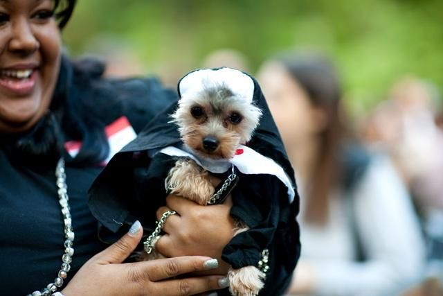 Homemade Nun Costume Ideas Dog Wear Costumes