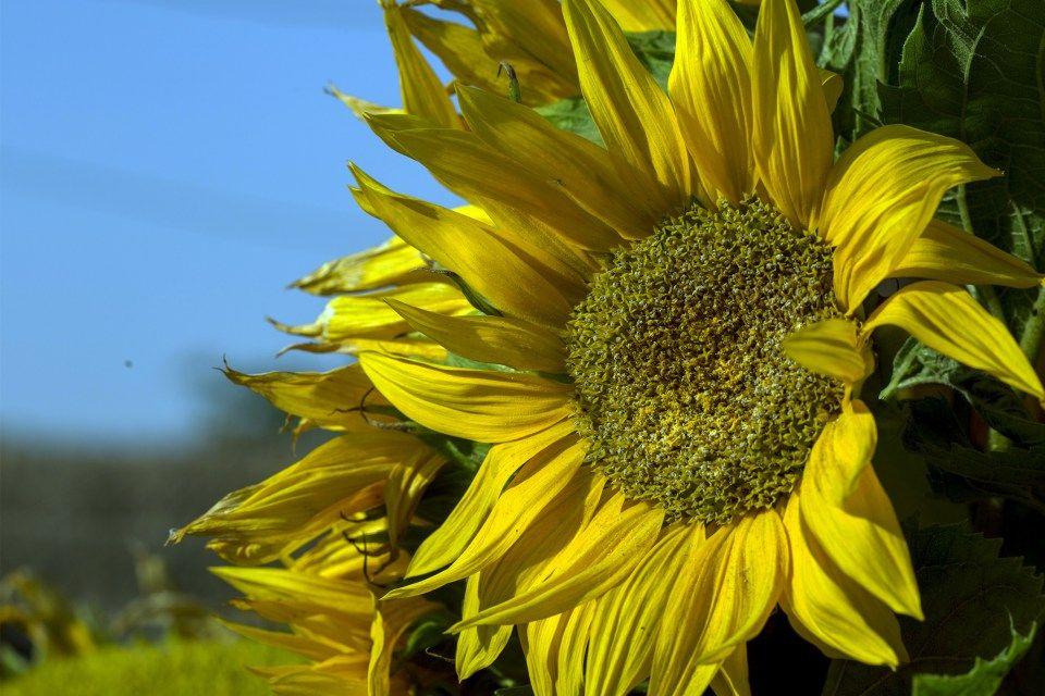 Beauty Radiating Beautiful Flower Shot Download Thousands Of Hd