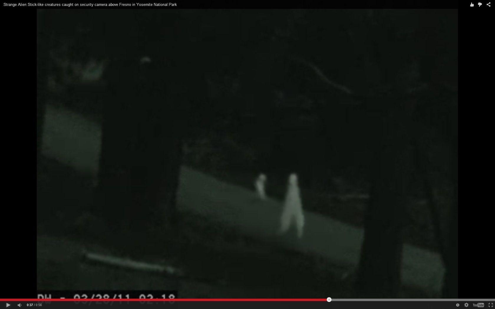 Strange Alien Stick Like Creatures Caught On Security