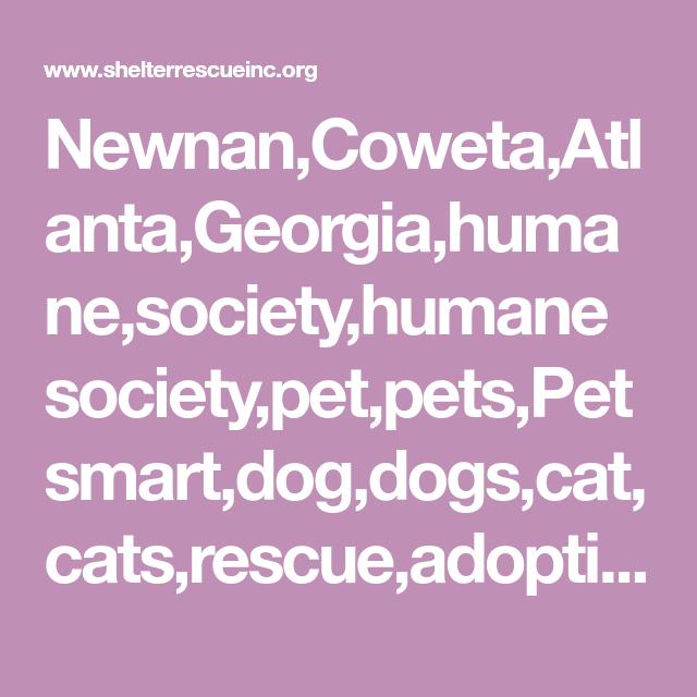 Newnan Coweta Atlanta Georgia Humane Society Humane Society Pet Pets Petsmart Dog Dogs Cat Cats Rescue Adoption Adopt P Adoption Pets Humane Society