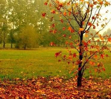 Chamizo con hojas secas JARDINERÍA Pinterest Searching