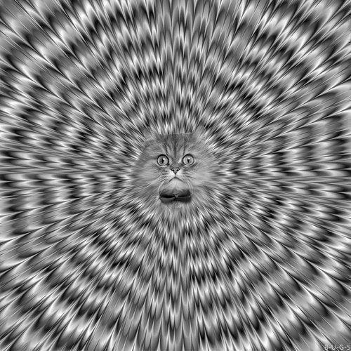 Gato LSD