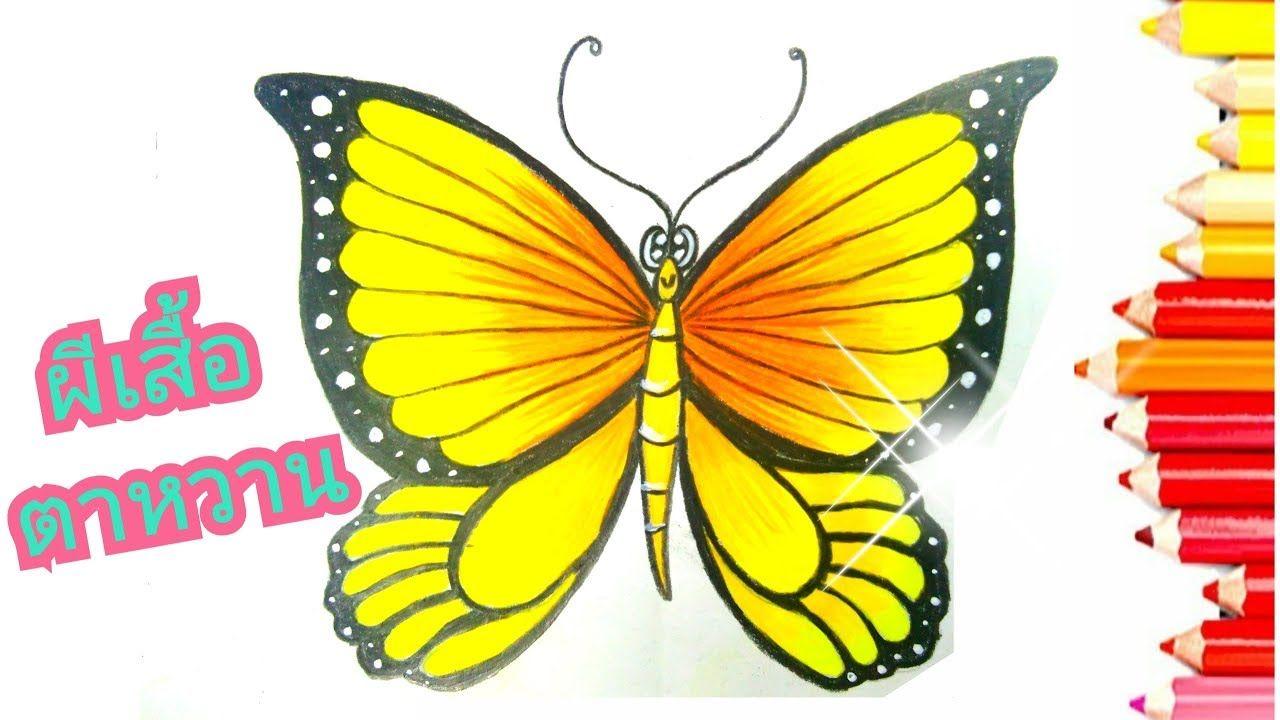 How To Draw And Coloring Butterfly L วาดภาพระบายส ผ เส อน าร กๆ ส ส น ผ เส อ จ นตนาการ