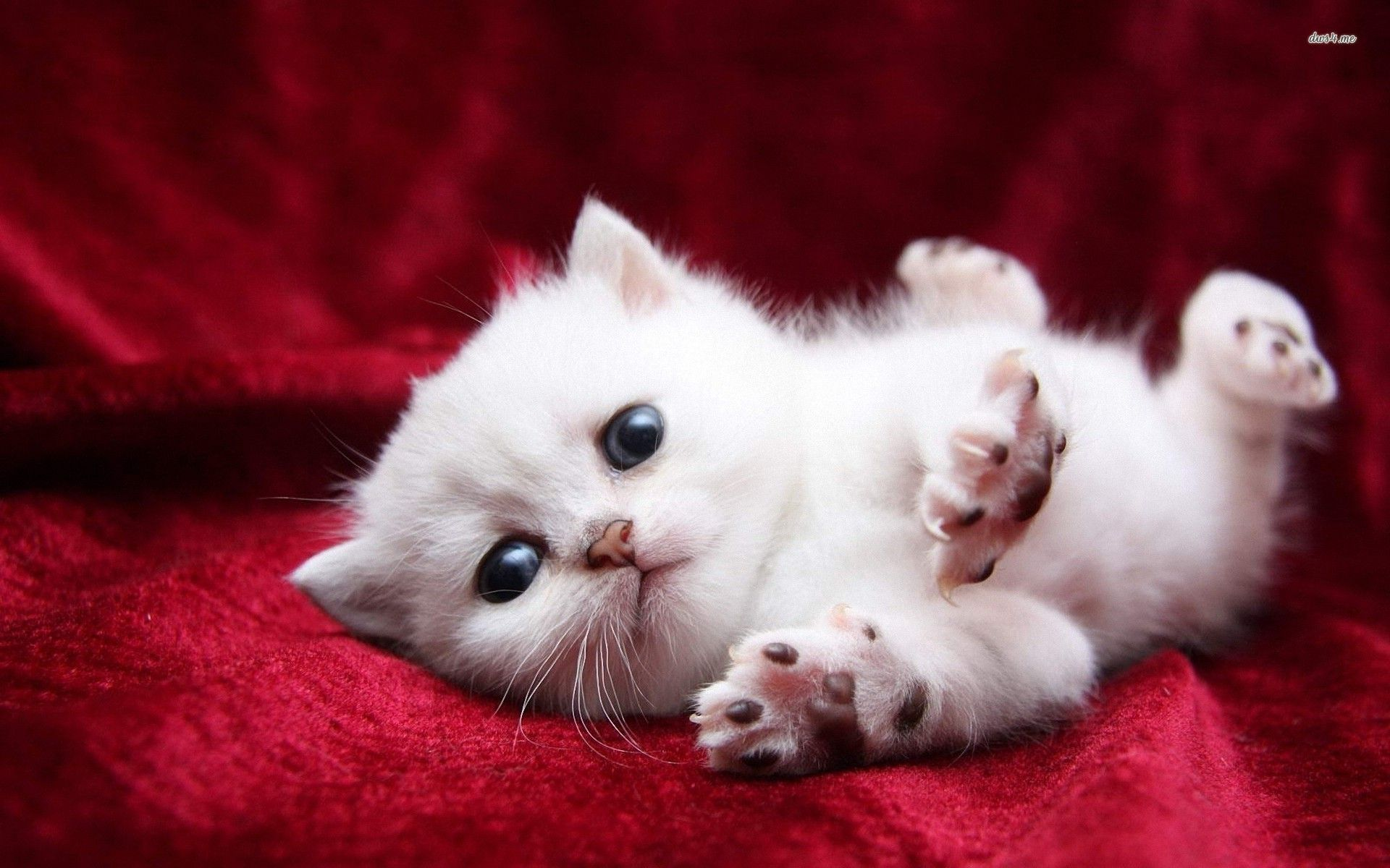 Cute Cats And Kittens Wallpaper With Images Kitten Wallpaper