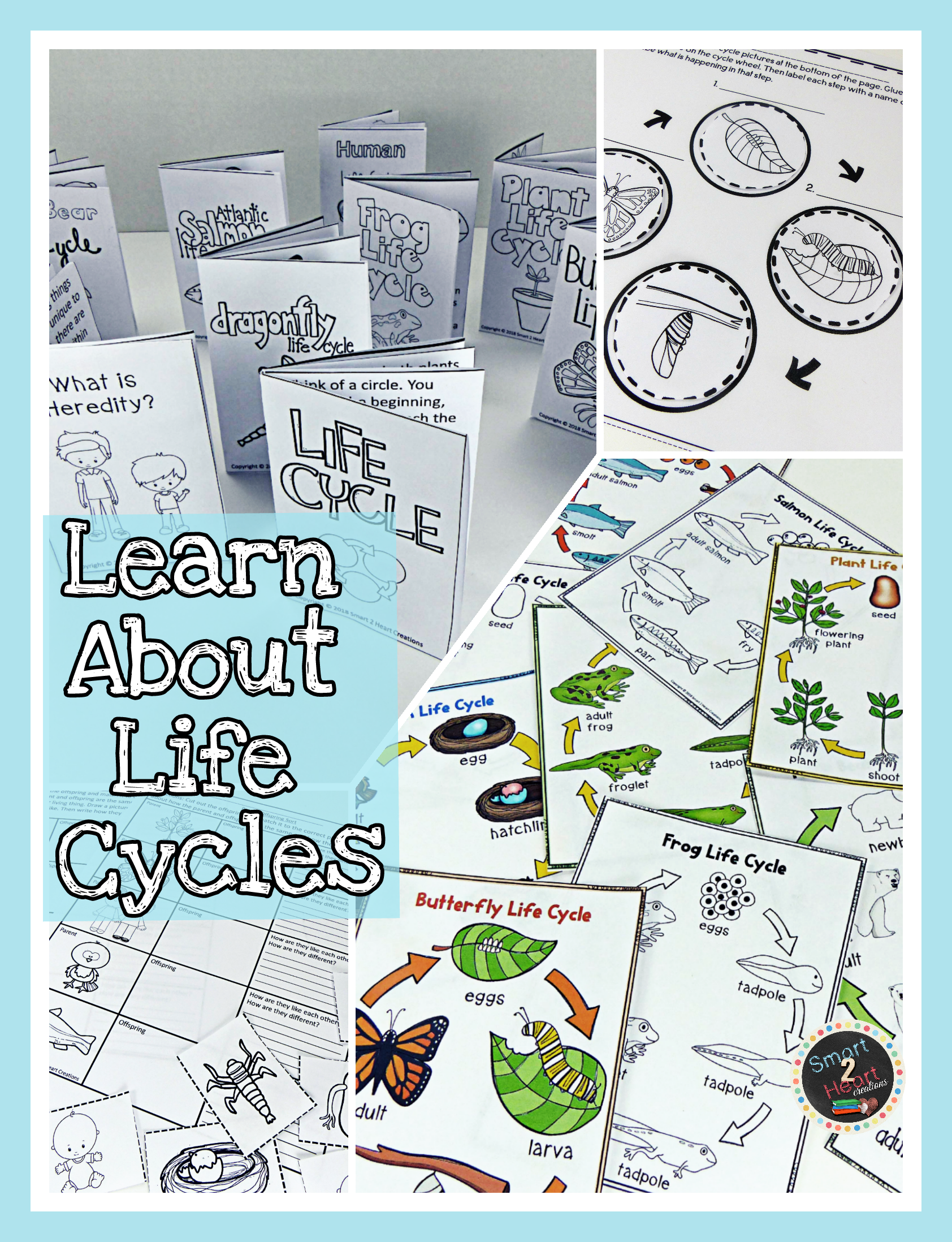 Life Cycles Unit 8 Animals And Plants All About Life Cycle