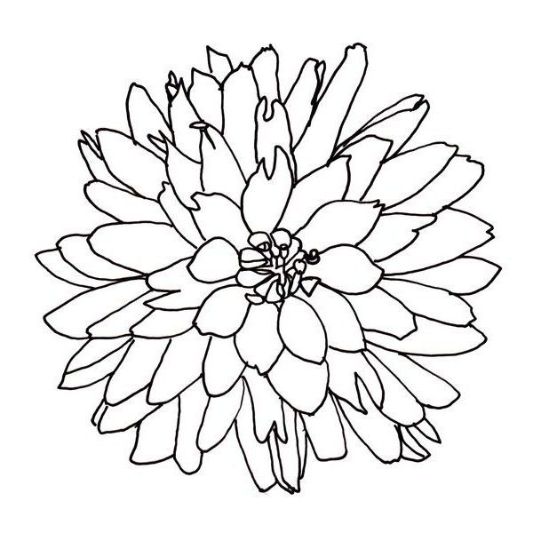 Drawing Flowers Liked On Polyvore Featuring Circle Filler Flowers Illustrations Backgrounds Circular An Flower Line Drawings Flower Drawing Line Drawing