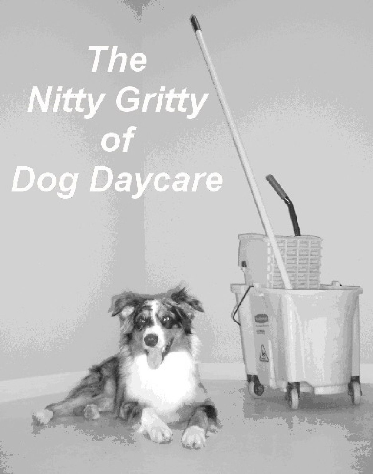 The Nitty Gritty Of Dog Daycare Dog Daycare Dog Boarding And Dog Grooming Paws Dog Daycare Dog Boarding Dog Grooming