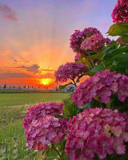احسن الصور يمكن الكتابه عليها بطاقات فارغة للكتابة عليها خلفيات فارغة للكتابة عل Landscape Photography Nature Photography Inspiration Nature Nature Photography