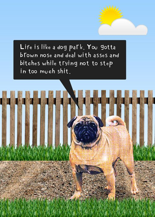 """Life is like a dog park."""