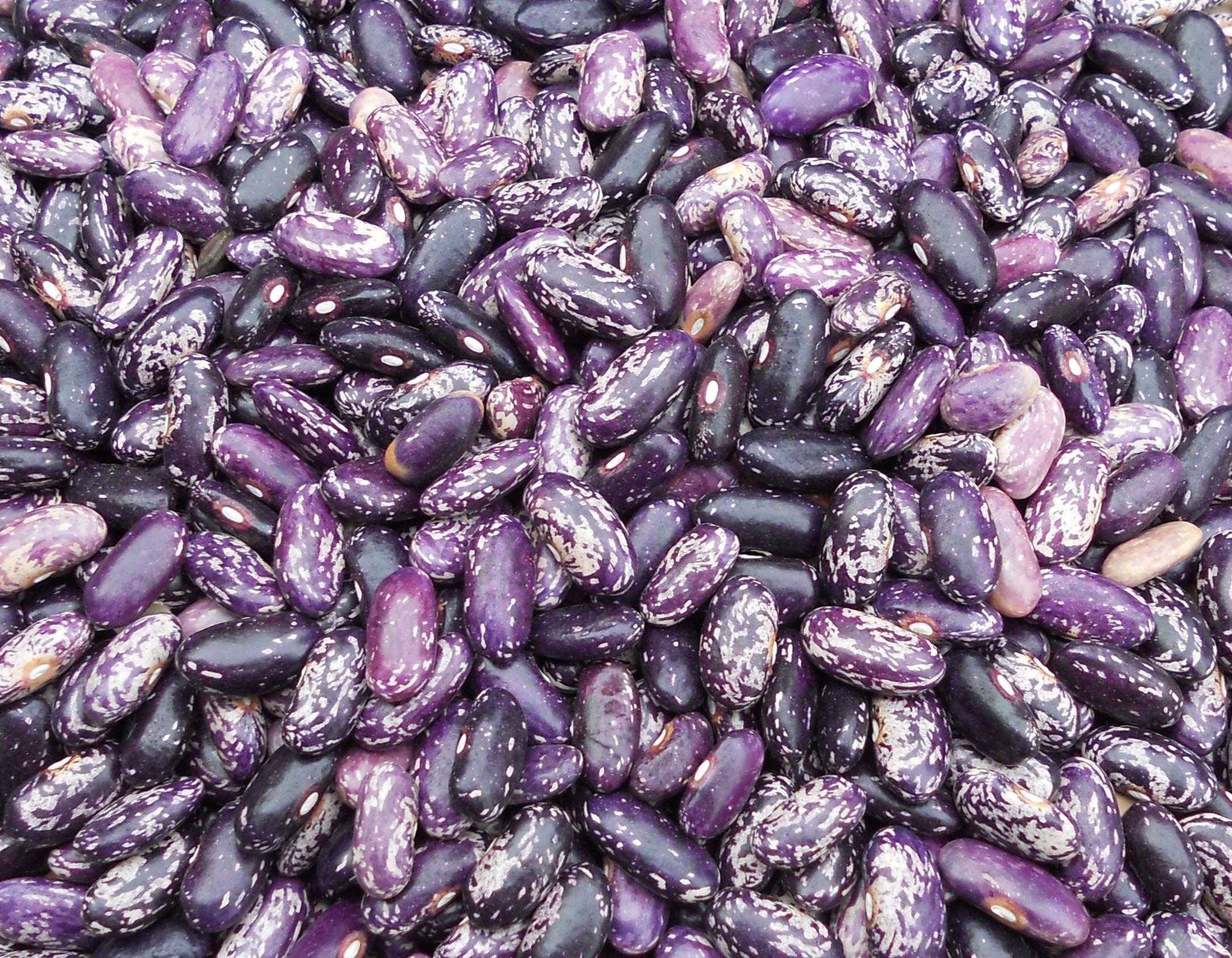 Dark purple striped fruit bush