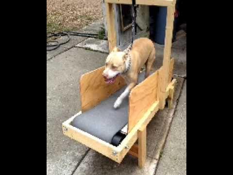 Homemade Dog Carpet Mill Dog Treadmill Outdoor Dog Toys Smart Dog Toys