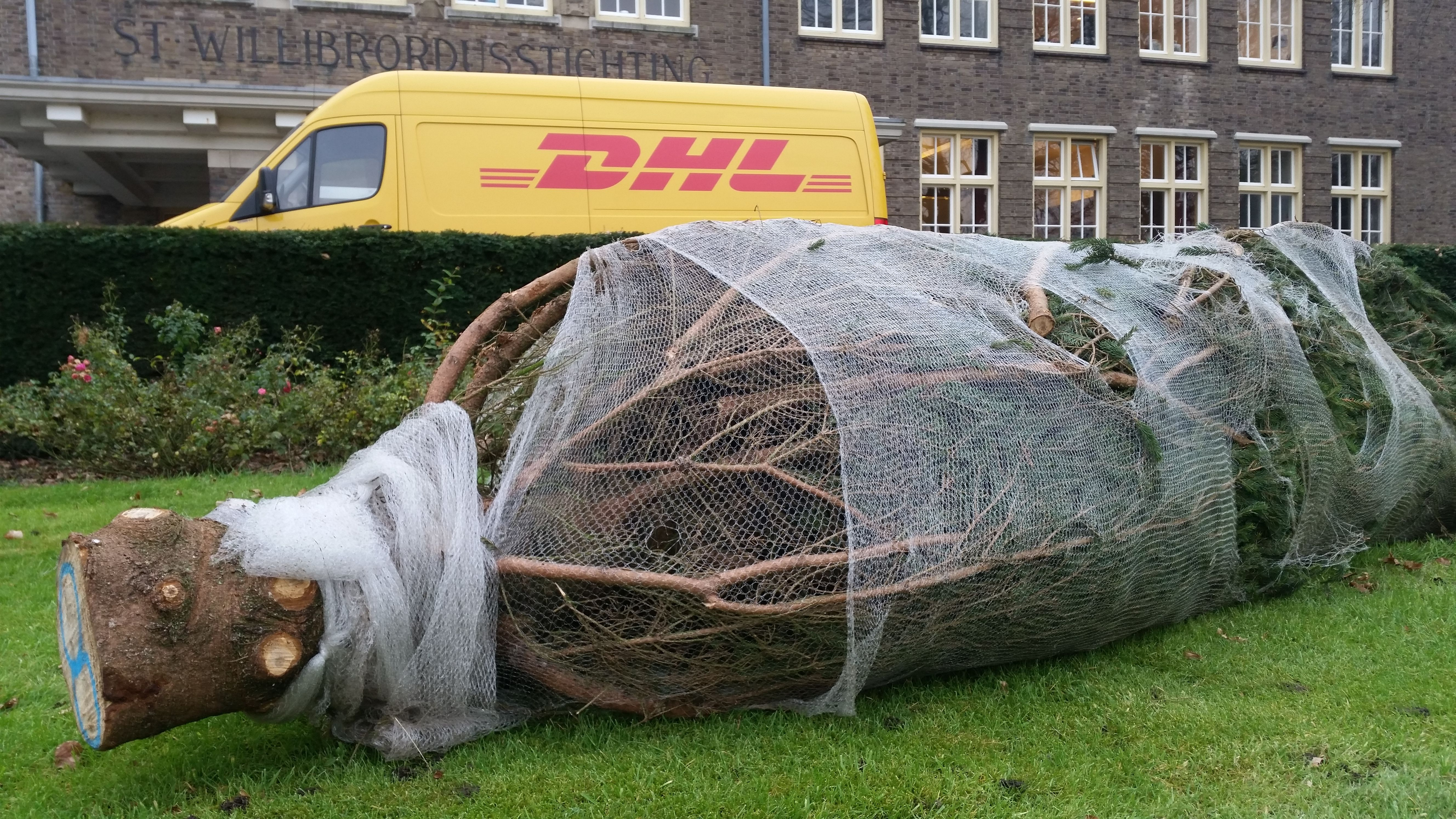 Some #deliverydriver that is    #christmastree #logistics