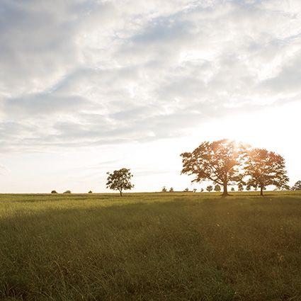 Weekends: White Oak Pastures | Garden and Gun