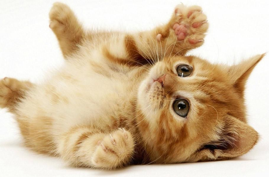 11 Tips To Stop Your Cat From Scratching Kittens Cutest Kitten Wallpaper Cuddle Pictures