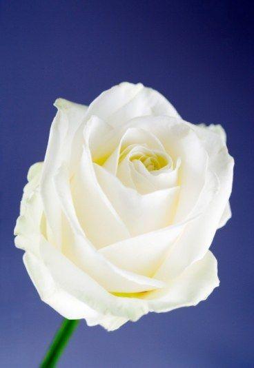 Desciframos Cuál Es El Significado De Las Flores Flores