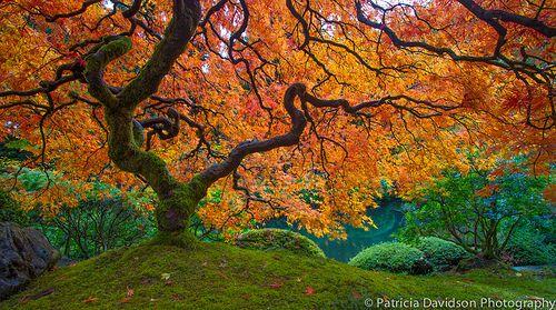Autumn's Jewel