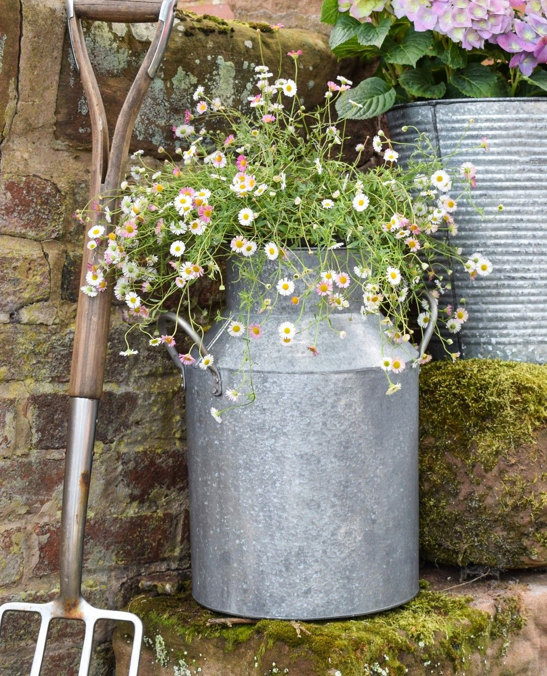 Zinc Milk Churn in 7  Country garden decor, Milk churn