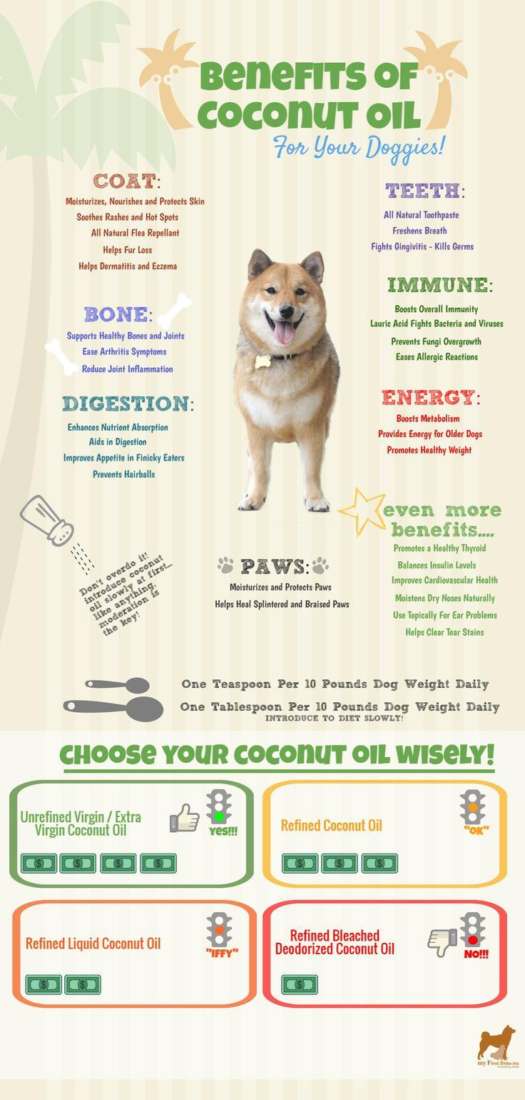 Do you know that coconut oil is a superfood for dogs