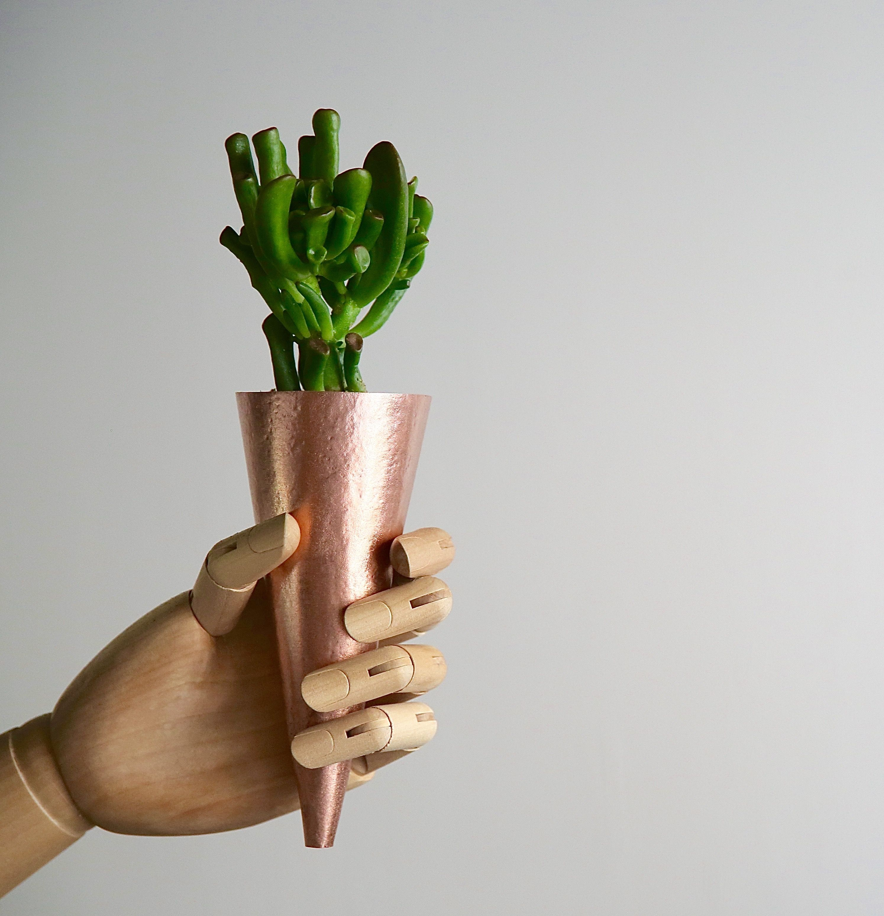Succulent cone