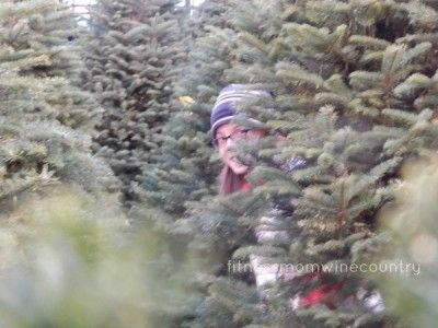 #tree #holiday #christmas
