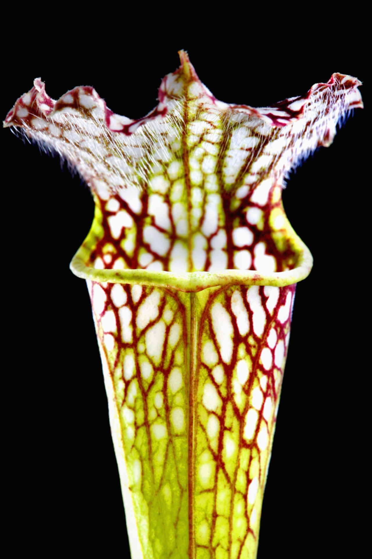 Pin On Top Unusual Plants