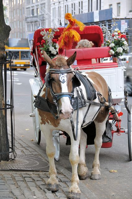 Horse and Carriage, Central Park, New York City