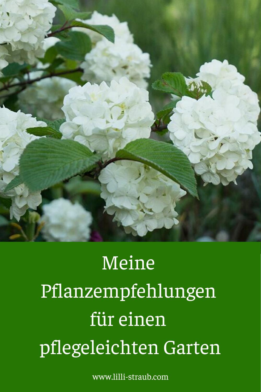 Meine Pflanzempfehlungen für einen pflegeleichten Garten