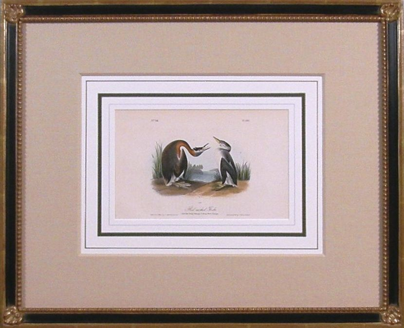 Audubon Print In A Closed Corner Frame With Double Mat At Bradl