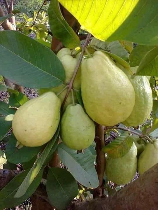 Pin Di Salvatore Papa Su Frutta Ortaggi Frutta