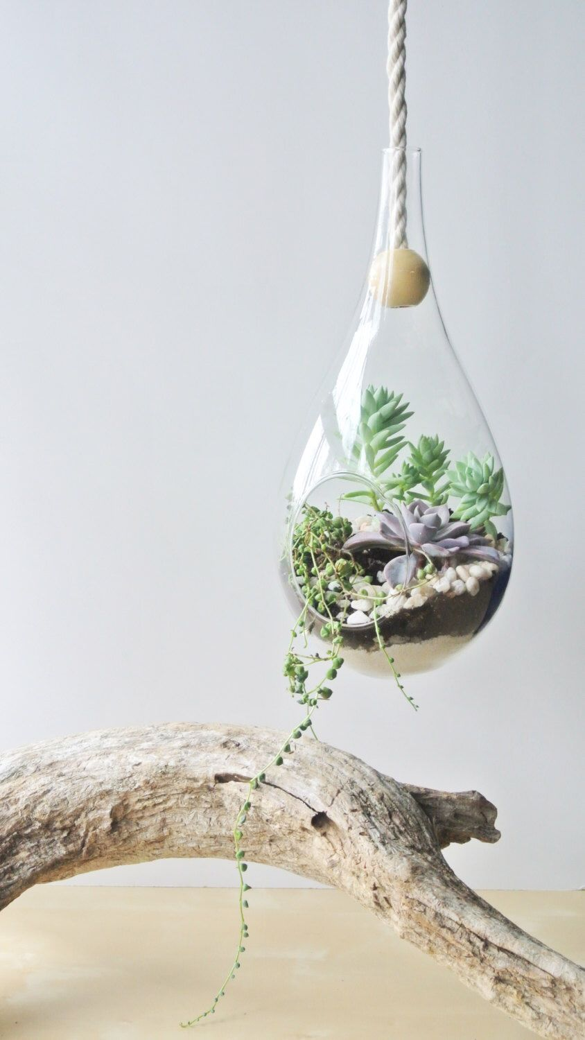 Pin By Peiyu Lee On Hanging Plants Pinterest Plants Terrarium