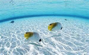 peces - Resultados de Yahoo España en la búsqueda de imágenes