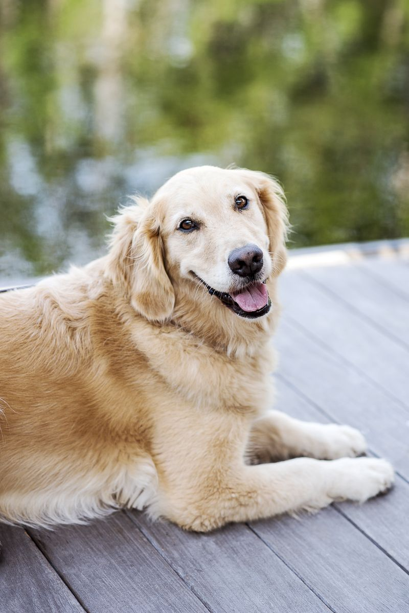 Why You Should Take Professional Pictures Of Your Dog Dogs Dog