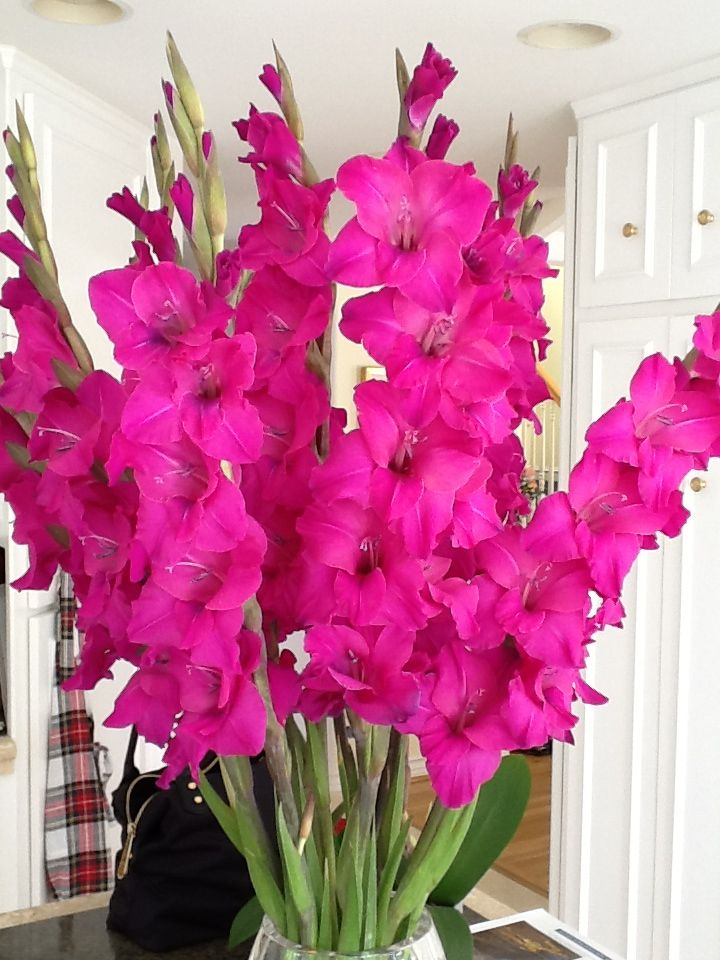 Gladiolas mean strength of character. Gladiolus flower