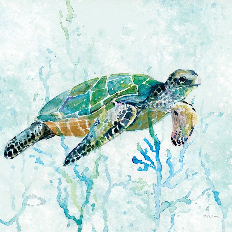 Sea Turtle Swim I Canvas Art Print By Carol Robinson Turtle