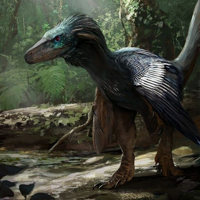 "Dinosaur on Instagram: ""Paravian theropods are all the rage right now, and not just because of the phylotarded, retrofitted ones that appear in a certain…"" #prehistoriccreatures"