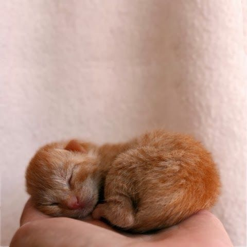 10 Adorable Newborn Kittens That Will Make You Go Aww The Pet S