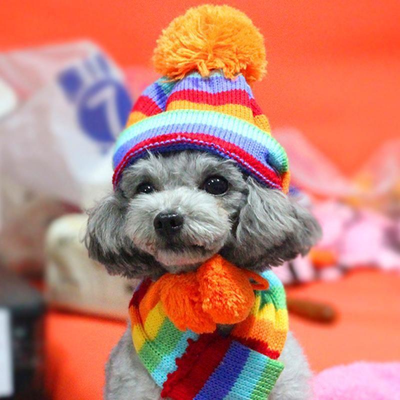 Warm Knitted Dog Hat/Scarf/Leg Warmer   Pet clothes, Dog ...