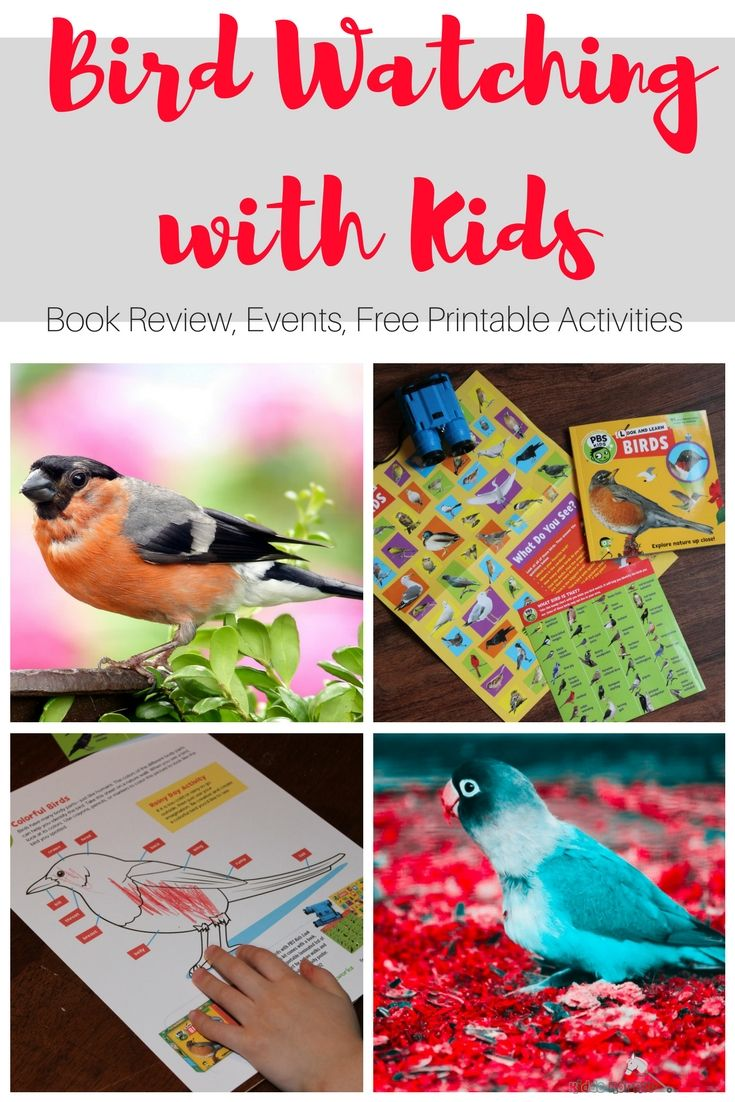 Click here for fun bird watching with kids activities