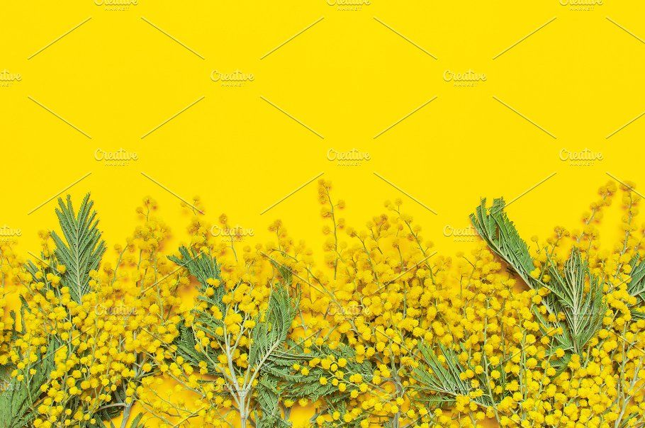Mimosa Flowers On Yellow Background Yellow Background Mimosa Flower Flower Backgrounds