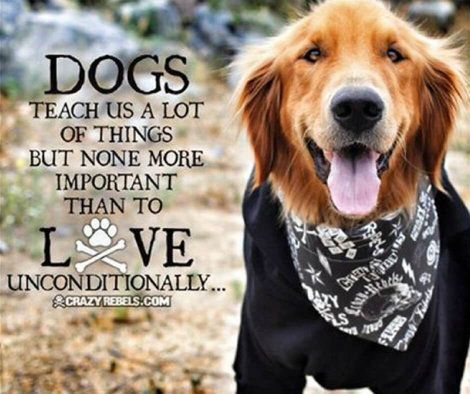 21 Inspirational Quotes Every Dog Lover Should Read Dog Quotes