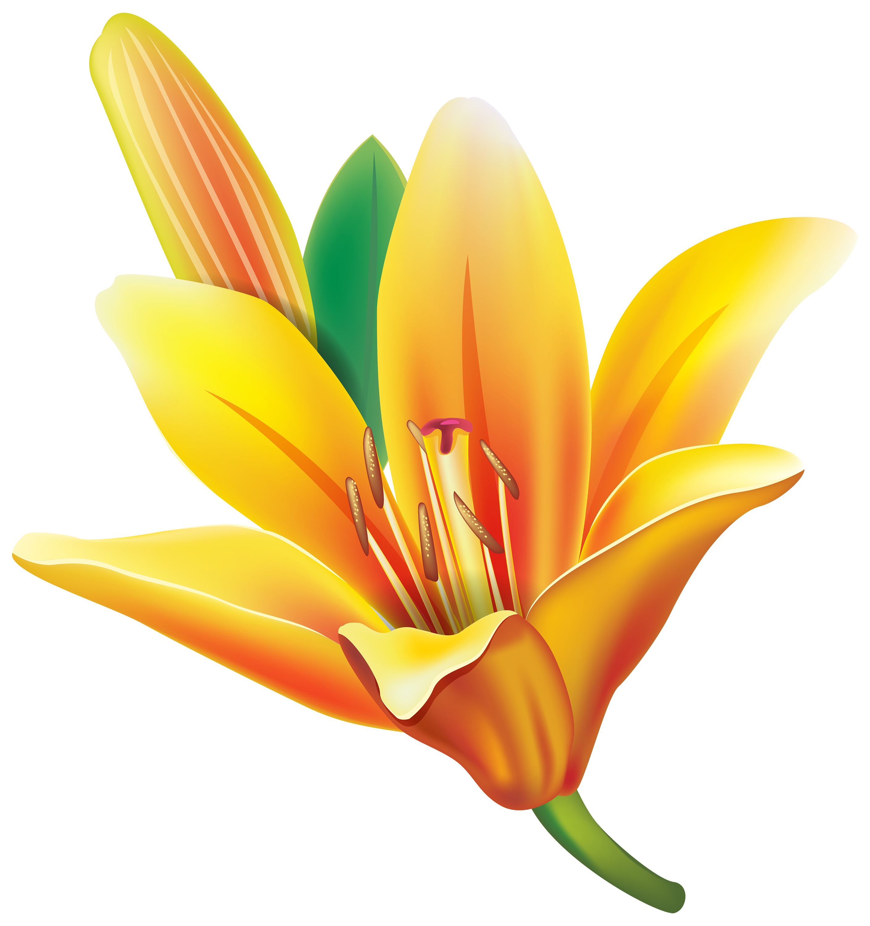 Yellow Lily Flower PNG Clipart CLIP ART FLOWERS TWO