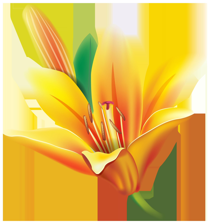 Yellow Lily Flower PNG Clipart El jardin de Maria