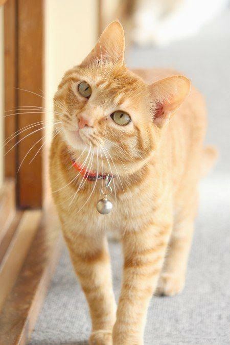 Ahh > Beautiful Cat Names Female xo Orange tabby cats