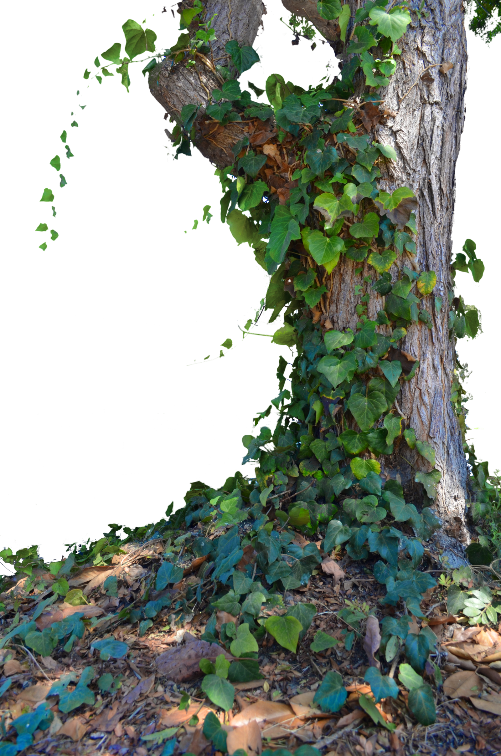 Tree with Ivy Stock Photo_ 0014 - PNG by annamae22 on ...