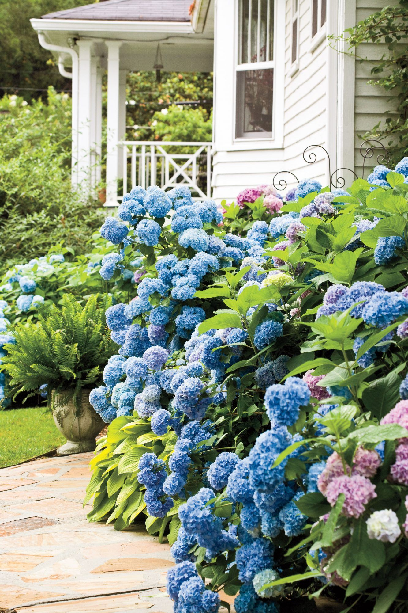 Learn When to Prune Different Hydrangeas in Your Garden