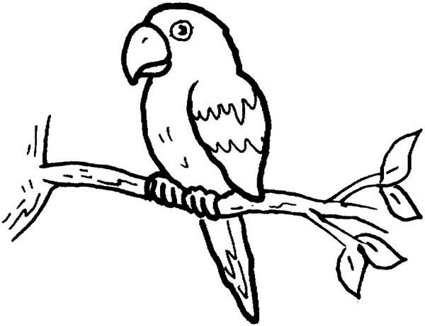 Parrot Coloring Pages Printable Procoloring